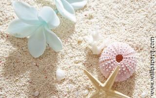 Shells on shore ,wide,wallpapers,images,pictute,photos