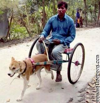 Indian man dog cart funny