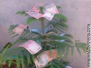Money trees funny ,wide,wallpapers,images,pictute,photos