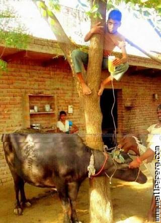 Village life of funny india