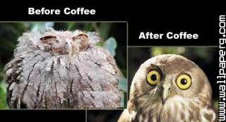 Coffee jokes funny photo