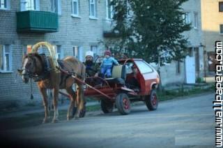 Mera sultan horse car funny