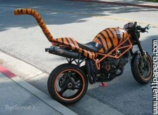 Tiger bike amazing funny ,wide,wallpapers,images,pictute,photos