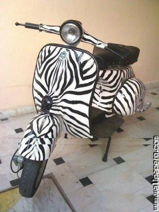 Zebra bike funny