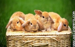 Bunny basket ,wide,wallpapers,images,pictute,photos
