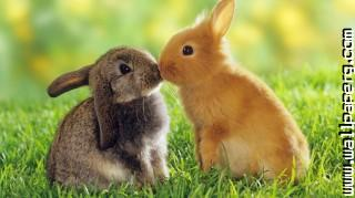 Bunny love ,wide,wallpapers,images,pictute,photos