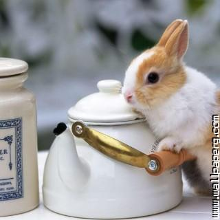 Bunny with teapot