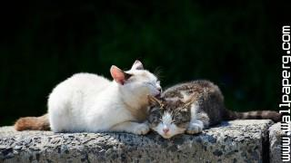 Cats sleeping wallpapers