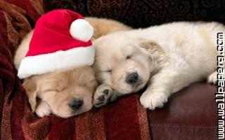 Christmas dog ,wide,wallpapers,images,pictute,photos