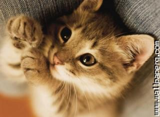 Cute little kitten ,wide,wallpapers,images,pictute,photos