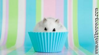 Hamster muffin wallpapers