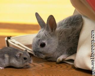 Hamster and rabbit ,wide,wallpapers,images,pictute,photos