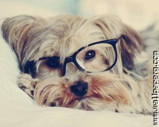 Puppy glasses