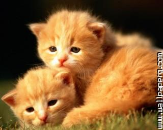 Two little kittens