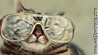 Cat funny ,wide,wallpapers,images,pictute,photos