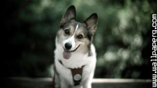 Cute dog ,wide,wallpapers,images,pictute,photos
