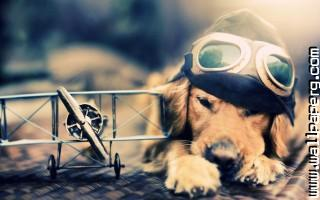 Pilot dog ,wide,wallpapers,images,pictute,photos