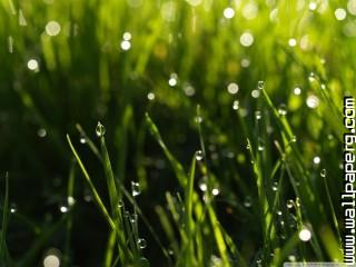 Summer rain wallpaper ,wide,wallpapers,images,pictute,photos