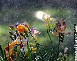 Summer rain(1) ,wallpapers,images,