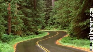 Rain on a road in olympic np washington ,wallpapers,images,