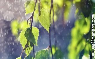 Summer rain ,wallpapers,images,