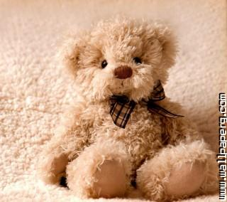 Cute amor teddy love ,wide,wallpapers,images,pictute,photos