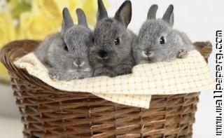 Bunnies1 ,wide,wallpapers,images,pictute,photos
