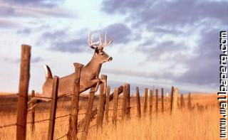 Deer ,wide,wallpapers,images,pictute,photos