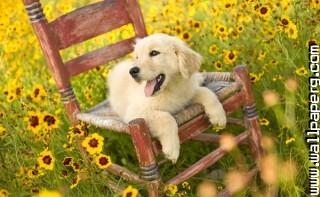 Dog flowers ,wide,wallpapers,images,pictute,photos