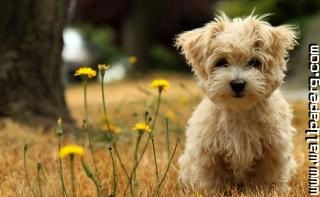 Doggy ,wide,wallpapers,images,pictute,photos