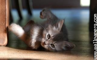 Little cat ,wide,wallpapers,images,pictute,photos