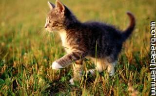 Sweet cat amor
