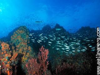 Los roques reef, venezuela ,wide,wallpapers,images,pictute,photos