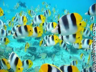 School of tropical fish,