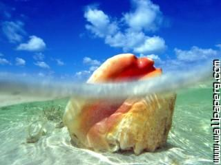 Sunken treasure, conch shell, bahamas ,wide,wallpapers,images,pictute,photos