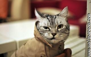 Funny cat(2) ,wide,wallpapers,images,pictute,photos