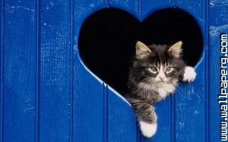 Funny valentines cat ,wide,wallpapers,images,pictute,photos