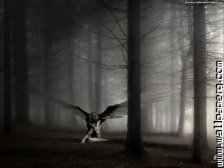 Gothic fallen angel dark forest wallpaper ,wide,wallpapers,images,pictute,photos