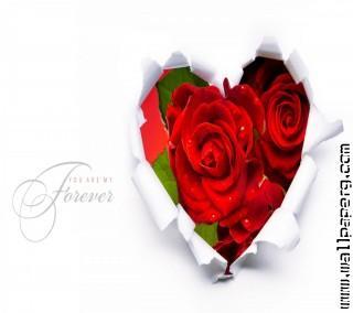 Forever love(5)