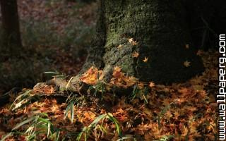 Fall leaves ,wide,wallpapers,images,pictute,photos