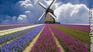 Flower garden ,wide,wallpapers,images,pictute,photos