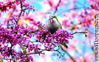 Bird in spring blossoms