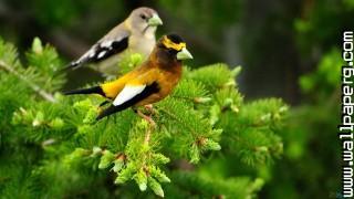 Hd birds