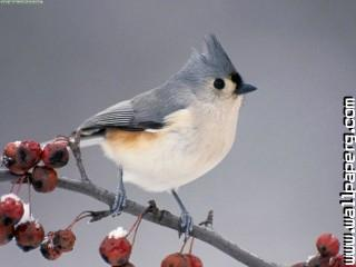 Birds awesome wallpaper ,wide,wallpapers,images,pictute,photos