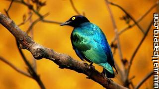 Colourful bird