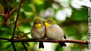 Cute birds 1 ,wide,wallpapers,images,pictute,photos