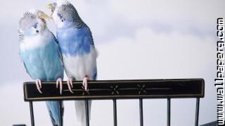 Love birds forever