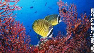 Cute, undersea, fish