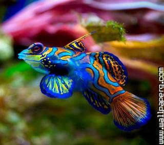 Fish 1 ,wide,wallpapers,images,pictute,photos