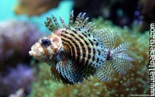 Sealife ,wide,wallpapers,images,pictute,photos